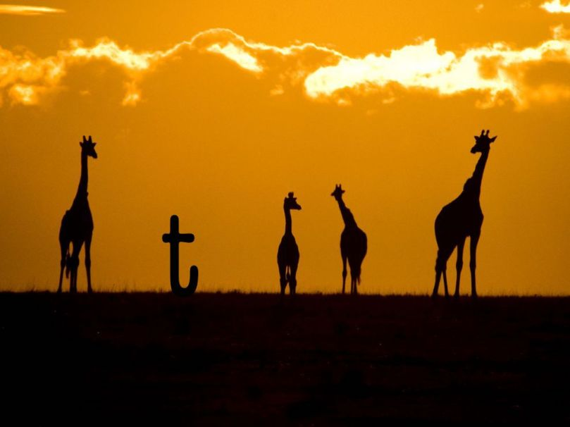 giraffes-sunset-crossley_3686_990x742
